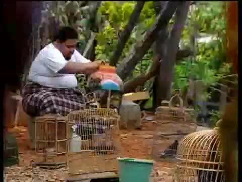 Iklan-Layanan-Masyarakat-Flu-Burung