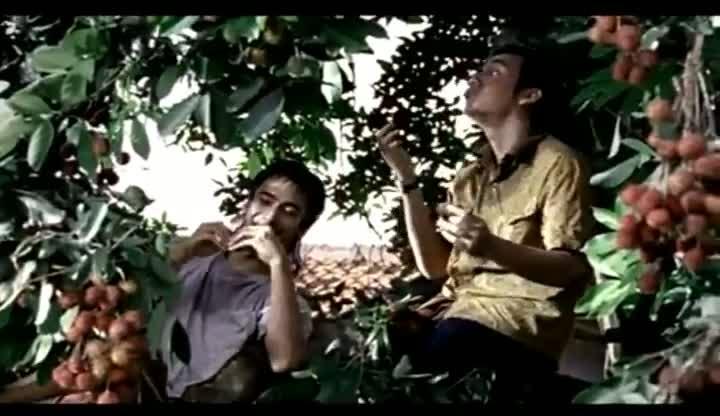 Sampoerna-Hijau-Rambutan
