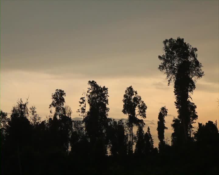 Sejengkal-Hutan-Segenggam-Harapan