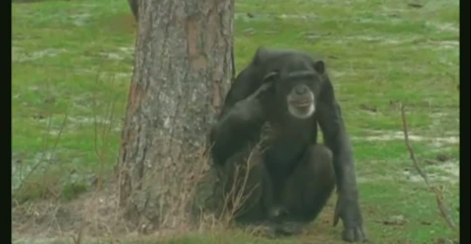 XL-Monyet