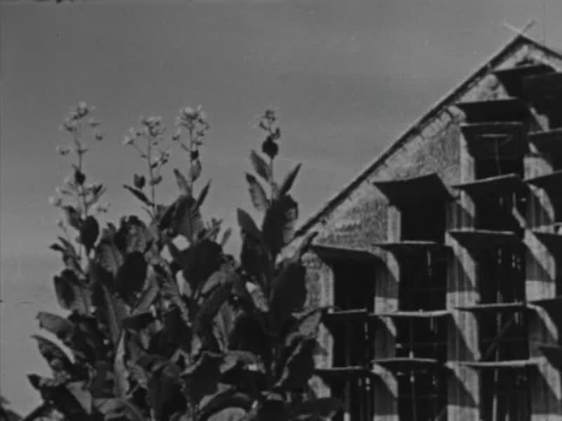 HINDIA-BELANDA-SEBELUM-1942-01