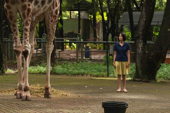 Kebun Binatang 6