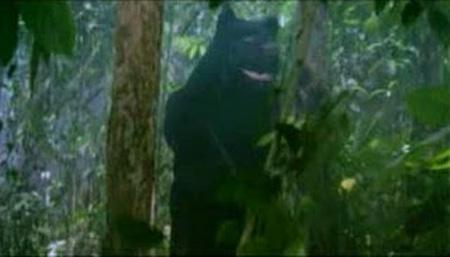 Tarzan Raja Rimba 4