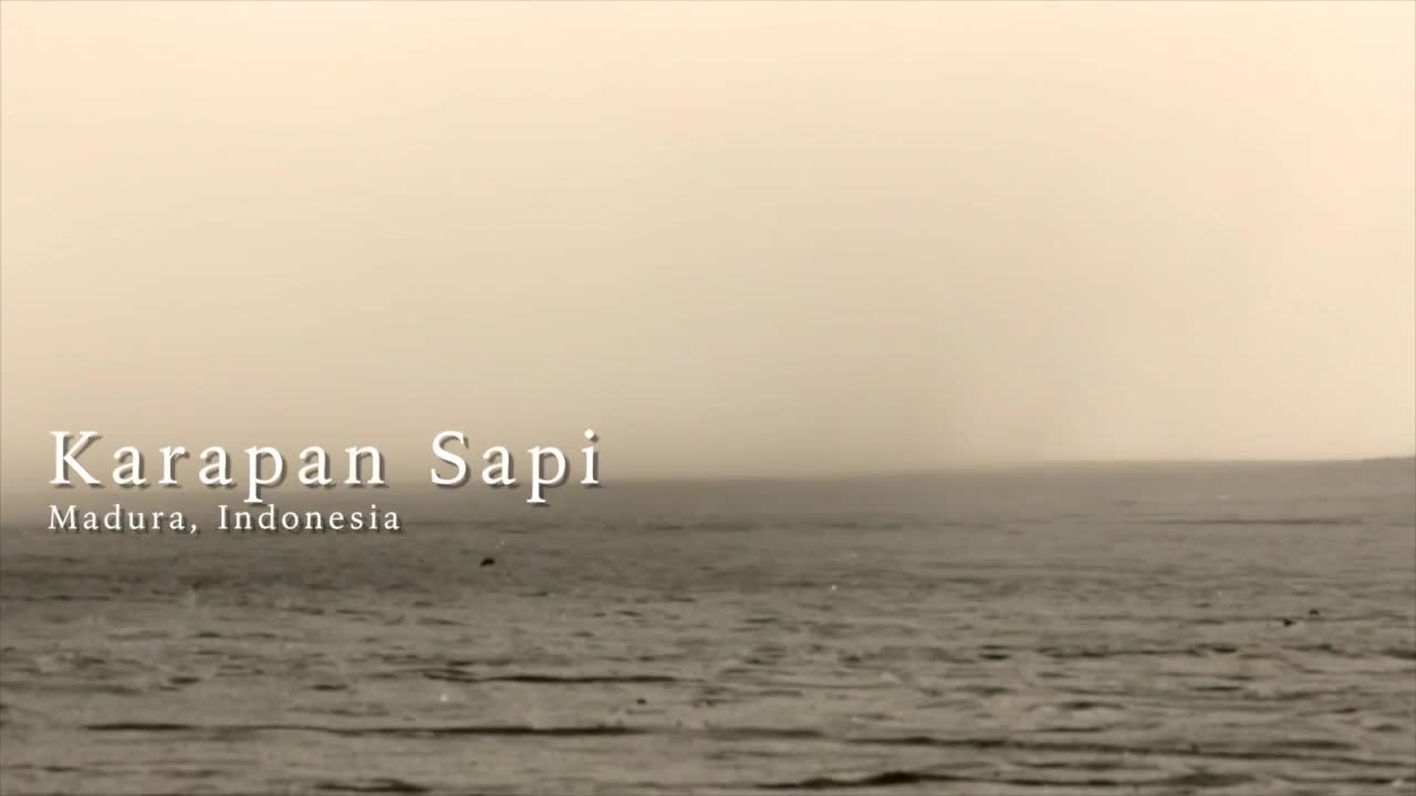 Karapan-Sapi-Indonesian-Bull-Racing-Championships