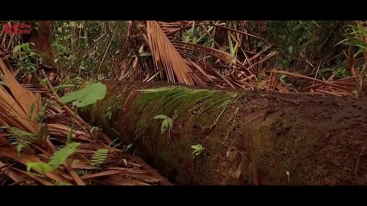 SKINDIGENOUS-Mini-documentary-Indonesia